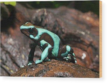 Dart Frogs Wood Prints