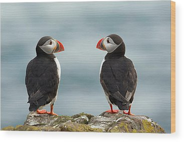 Puffin Wood Prints