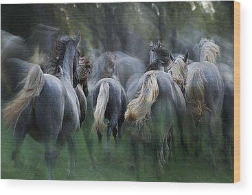 Galloping Wood Prints