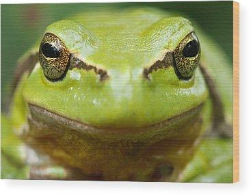 Amphibians Wood Prints