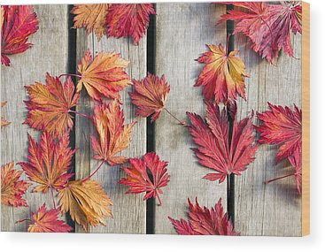 Fallen Leaf Photographs Wood Prints