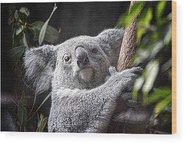 Australian Wildlife Wood Prints