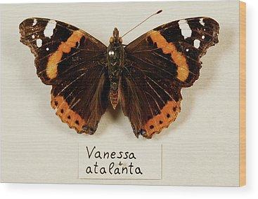 Vanessa Wood Prints