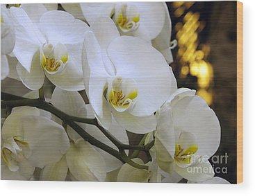 Andee Design White Wood Prints