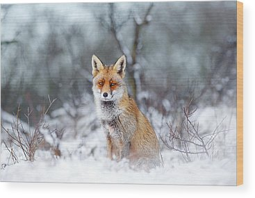 Fox Wood Prints