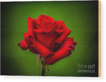 Red Rose Wood Prints