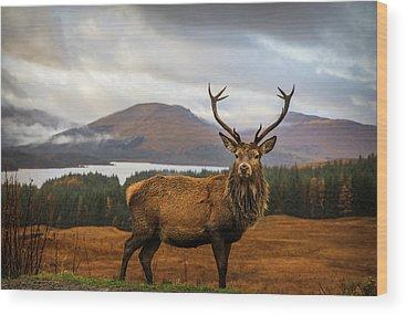Animal Kingdom Wood Prints