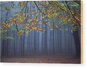 Forests Wood Prints