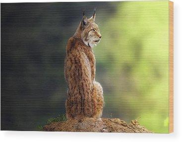 Lynx Wood Prints