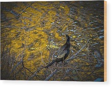 Cormorant Wood Prints