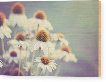 Cone Flower Wood Prints