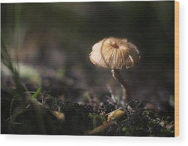 Toadstools Wood Prints