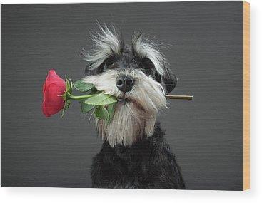 Proposal Photographs Wood Prints
