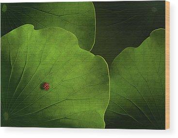 Ladybug Wood Prints
