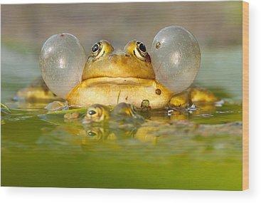 Frog Wood Prints