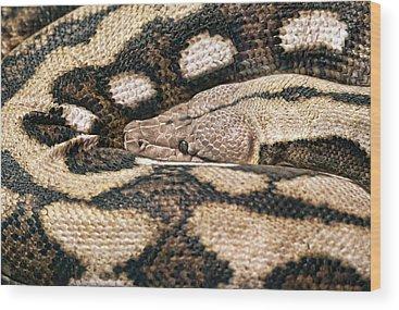 Brown Snake Wood Prints