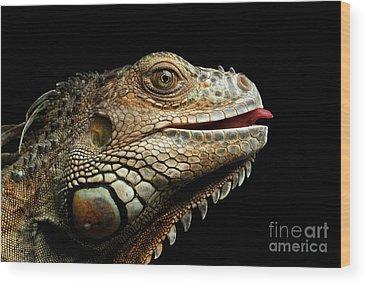 Reptile Wood Prints