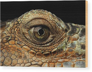 Reptiles Wood Prints