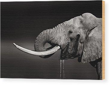 Tusk Wood Prints