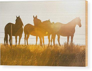 Quarter Horse Wood Prints
