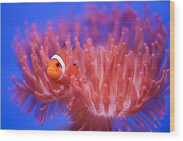 Fish Wood Prints