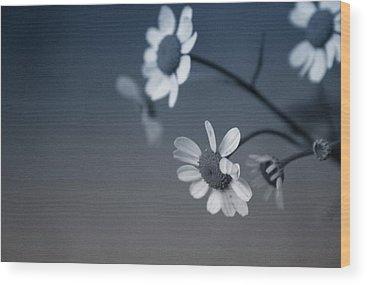 Zen Garden Wood Prints
