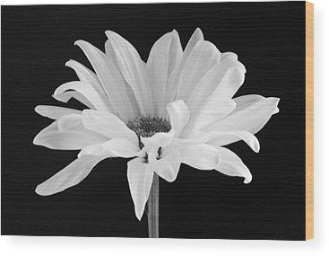 Daisies Wood Prints