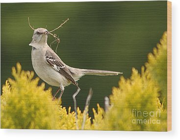 Mockingbird Wood Prints