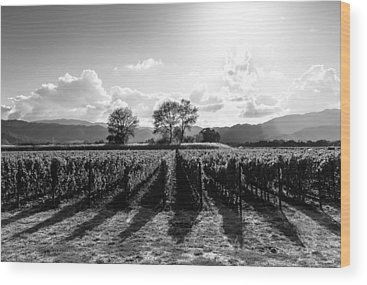 Napa Valley And Vineyards Wood Prints