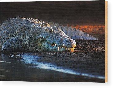 Crocodile Wood Prints