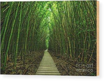 Bamboo Photographs Wood Prints
