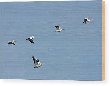 Pelican Island National Wildlife Refuge Wood Prints