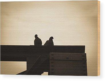 Pigeon Wood Prints
