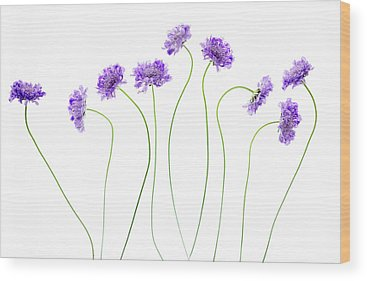 Pincushion Wood Prints