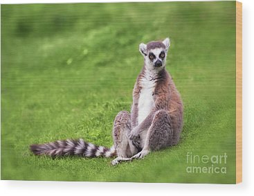 Ring-tailed Wood Prints