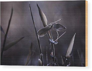 Grasshopper Wood Prints