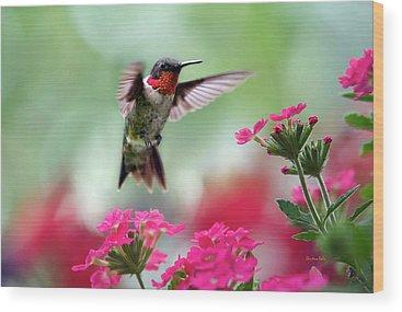 Flying Hummingbird Wood Prints