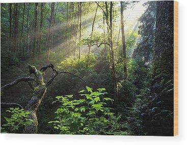 Vegetation Wood Prints