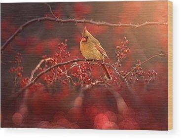 Cardinal Birds Wood Prints