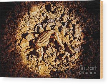 Palaeontology Wood Prints