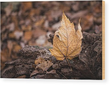 Maple Leaf Art Wood Prints
