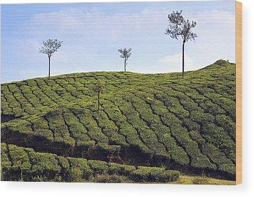Kerala Wood Prints