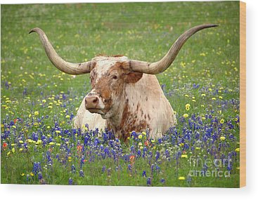 Longhorns Wood Prints