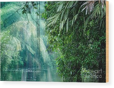 Rain Forest Wood Prints