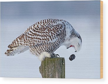 Designs Similar to Cough It Up Buddy - Snowy Owl