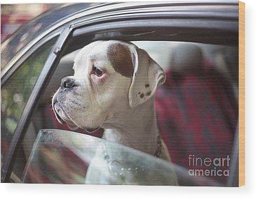 Designs Similar to Dog In A Car by Aerogondo2