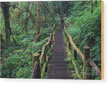 Footpath Wood Prints