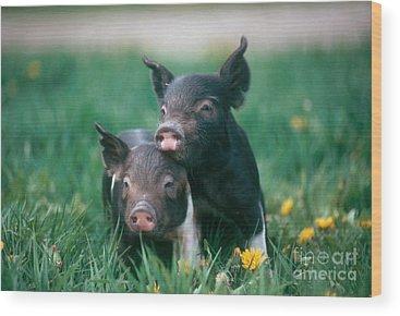 Piglet Wood Prints
