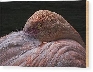 Waterbirds Wood Prints