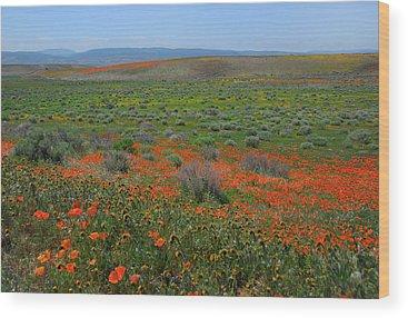 Poppies Wood Prints